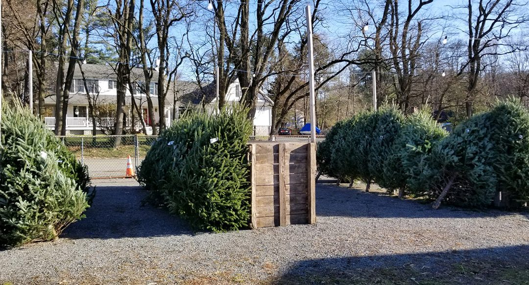 Items Available at the Christmas Tree Sale